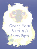 "Click HERE to read, ""Giving Your Birman A Show Bath."""