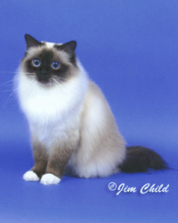 Highest Scoring  Kitten in Show, Sacred Cat of Burma Fanciers annual show, 2000-01
